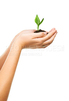 Buy stock photo Closeup shot of cupped hand holding a small seedling