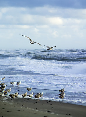 Buy stock photo Beach-scape with seagulls, breaking waves and atmospheric clouds