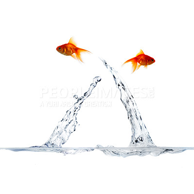Buy stock photo High resolution image of 2 goldfish leaping out of the water, crossing in mid-air.