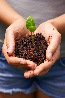 Buy stock photo Cropped shot of a young woman's hands holding soil sprouting new plants