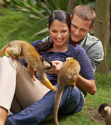Buy stock photo Cropped shot of a young couple spending time at an animal sanctuary