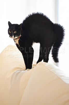 Buy stock photo Shot of a black cat standing on a sofa