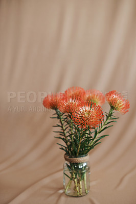 Buy stock photo Studio shot of a protea against a beige background