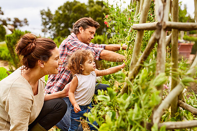 Buy stock photo Shot of a couple and their baby girl working in their organic garden