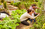 Managing their organic garden