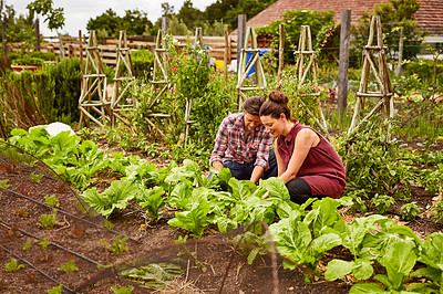 Buy stock photo Shot of a smiling couple working in their organic garden