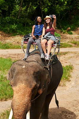 Buy stock photo Cropped shot of young tourists taking a selfie while on an elephant ride through a tropical rainforest