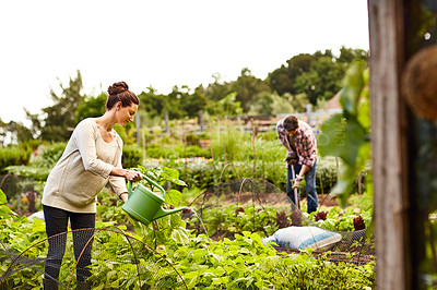 Buy stock photo Shot of a woman watering her organic vegetable garden with her husband working in the background