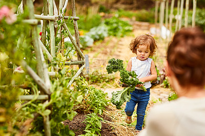 Buy stock photo Shot of a little girl carrying vegetables to her mother working in a garden