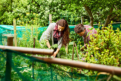 Buy stock photo Shot of a mature couple working in their organic garden