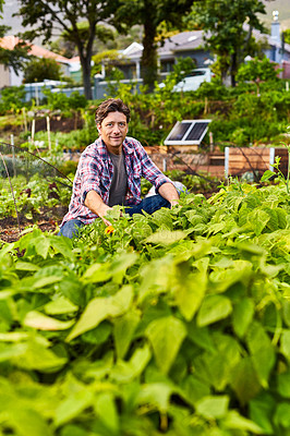 Buy stock photo Portrait of a mature man kneeling in his organic vegetable garden