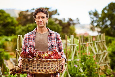 Buy stock photo Portrait of a smiling man holding a basket of lettuce while standing in his organic garden