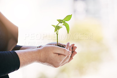 Buy stock photo Cropped shot of a businesswoman holding a plant