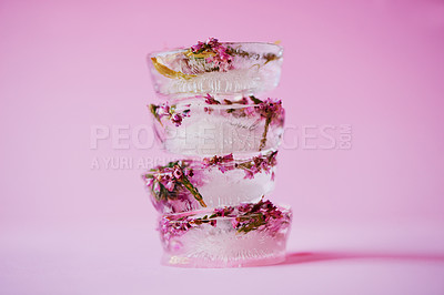 Buy stock photo Studio shot of flowers frozen into ice blocks against a pink background