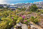 Trails of Table Mountain National Park