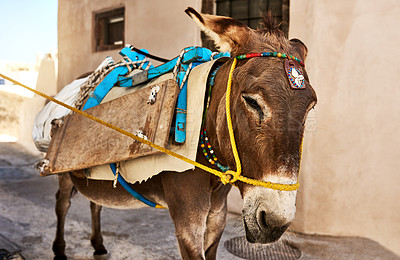 Buy stock photo Shot of a hard working donkey carrying equipment on it's back while walking down a street during the day