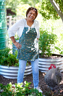 Buy stock photo Shot of a mature woman standing next to her pet chicken in her garden at home