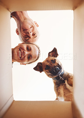 Buy stock photo Low angle portrait of a happy couple and their dog looking into a box together