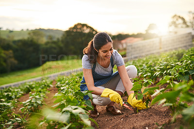 Buy stock photo Shot of an attractive young woman working the land on her farm