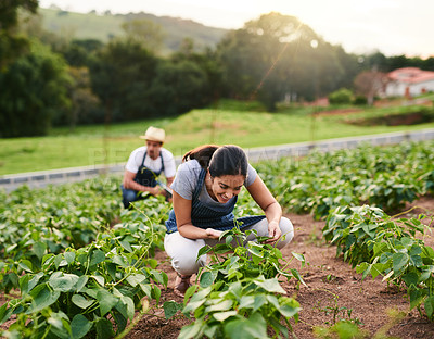 Buy stock photo Shot of an attractive young woman working on the family farm with her husband in the background