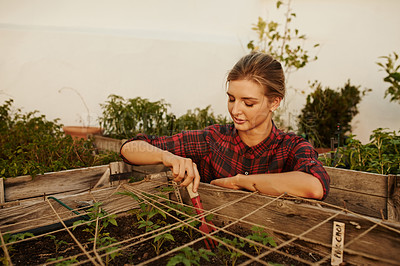 Buy stock photo Cropped shot of an attractive young woman busy with her plants in the garden
