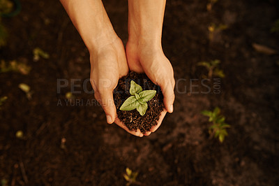 Buy stock photo High angle shot of an unrecognizable young woman busy with her plants in the garden