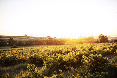 Buy stock photo Shot of a beautiful farm at sunset
