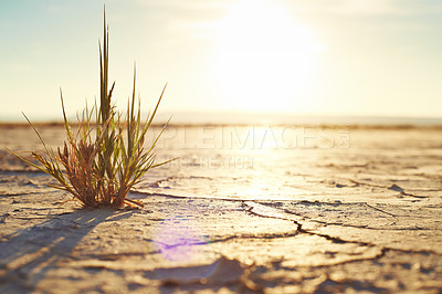 Buy stock photo Shot of a plant growing out of the dry ground of a desert