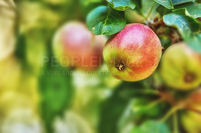 Buy stock photo Fresh apple in the garden