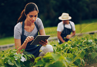 Buy stock photo Shot of a young woman using a digital tablet while working in a garden with her husband in the background