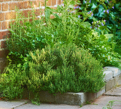 Buy stock photo Small herb gardenSmall herb garden