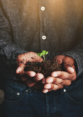 Buy stock photo Cropped shot of an unrecognizable man holding a budding plant