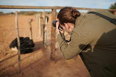 Buy stock photo Shot of a young man taking pictures of ostriches with his camera on an ostrich farm