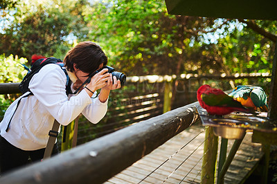 Buy stock photo Cropped shot of an attractive young female birdwatcher snapping pictures while exploring outdoors