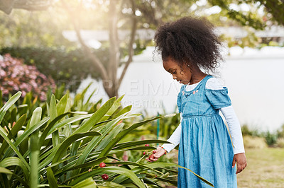 Buy stock photo Shot of an adorable little girl picking fruit from a plant outdoors