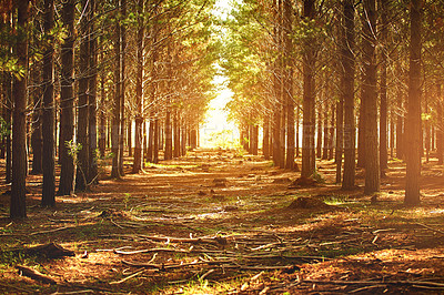 Buy stock photo Shot of a row of trees in nature