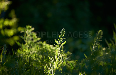 Buy stock photo Garden details early morning, may, denmarkA garden of all seasons