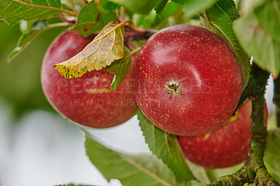 Buy stock photo An apple a day keeps the doctor away