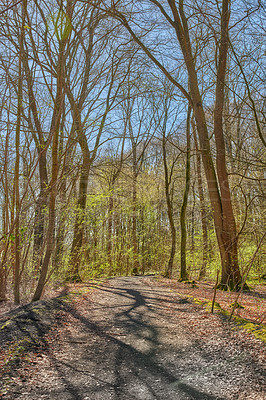 Buy stock photo A photo of forest beauty in early springtime