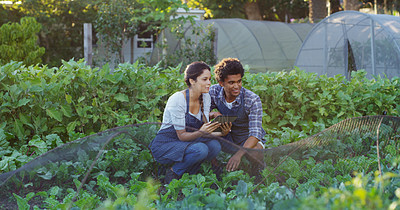 Buy stock photo Shot of an affectionate young couple using a tablet while checking on the crops on their farm