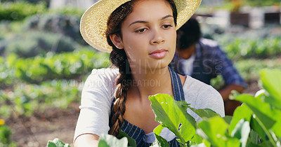 Buy stock photo Cropped shot of an attractive young female farmer working on the farm with her husband  in the background