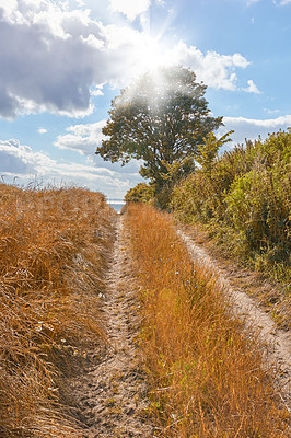 Buy stock photo A photo of a a dirt road in vibrant country field in harvest