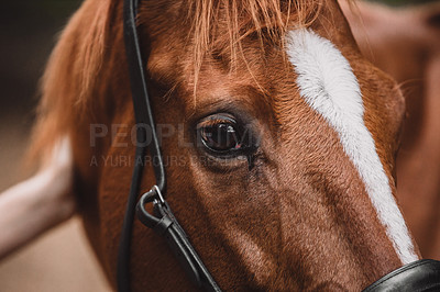 Buy stock photo Cropped shot of a woman bonding with her horse in nature