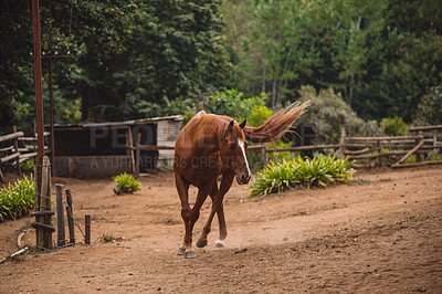 Buy stock photo Shot of a beautiful horse on a ranch