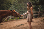 The simplest way to a horse's heart