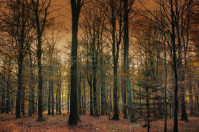 Buy stock photo Shot of a beautiful and thriving forest at sunset