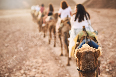 Buy stock photo Rearview shot of a group of women riding on camels in a desert