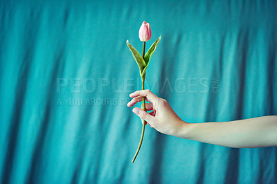 Buy stock photo Cropped shot of an unrecognizable woman holding a flower against a blue background