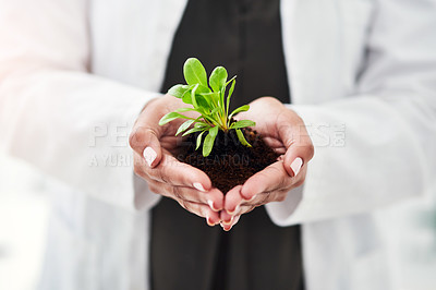 Buy stock photo Cropped shot of an unrecognizable woman holding a plant growing out of soil