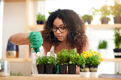 Buy stock photo Cropped shot of an attractive young female botanist potting plants while working in her florist
